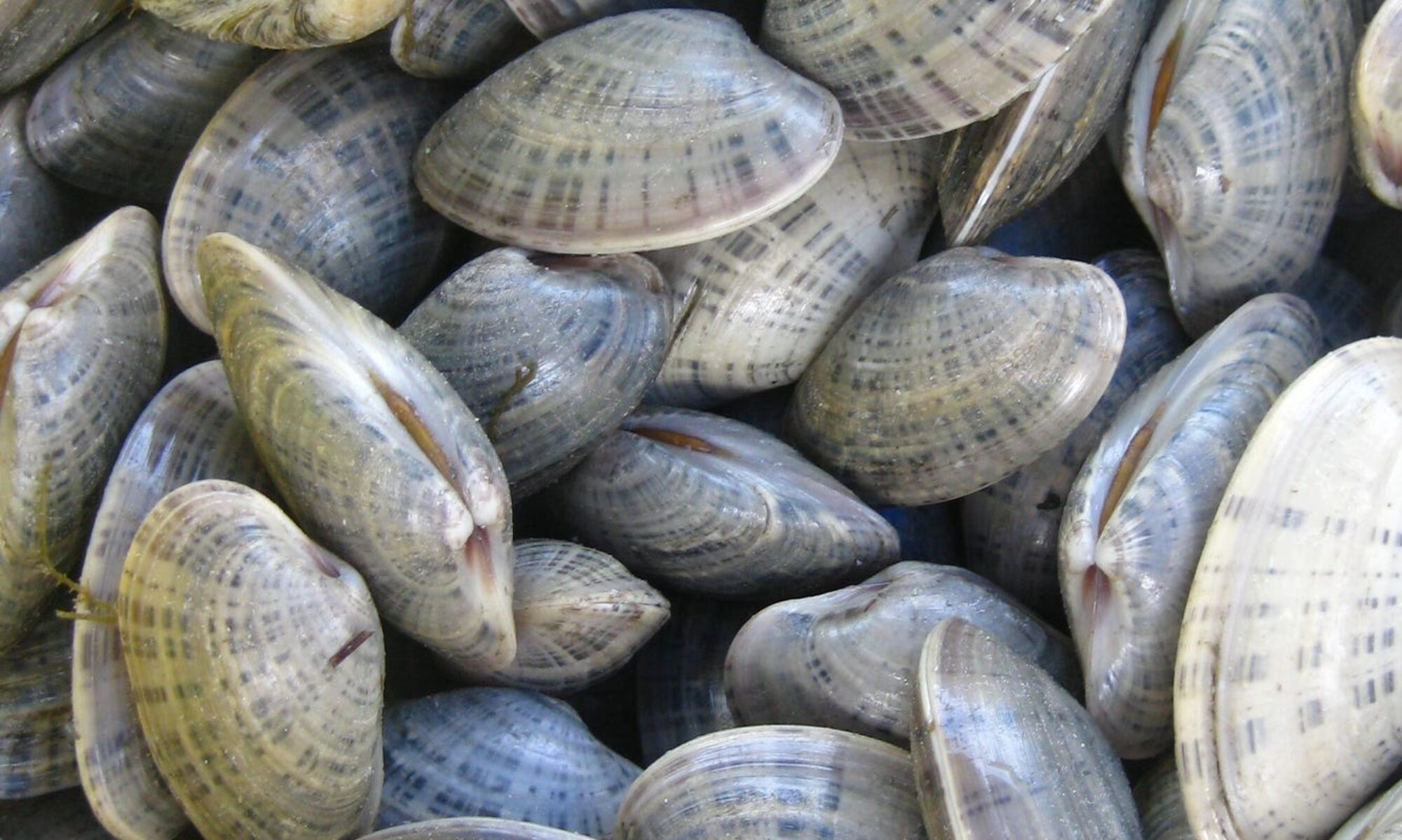 Shellfish Pathology Laboratory